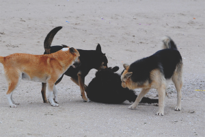 How to get rid of stray dogs
