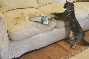 Comment se débarrasser des poils de chat