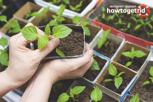 Capacities for growing seedlings of pepper