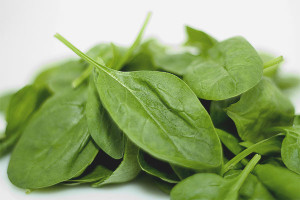 How to grow spinach on the windowsill