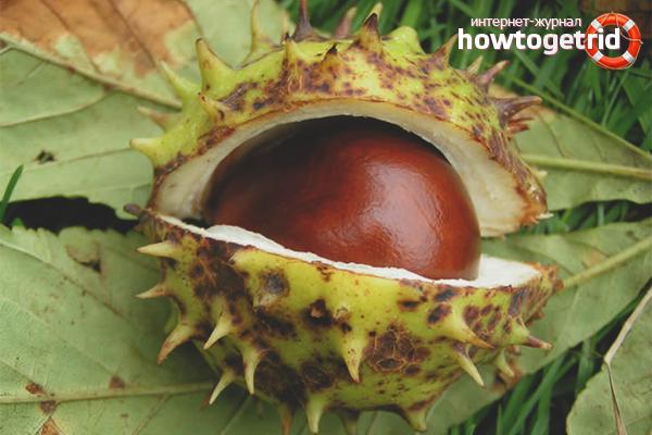 Chestnut from prostatitis