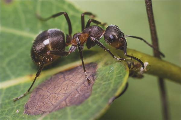 Jak Pozbyć Się Mrówek W Doniczce