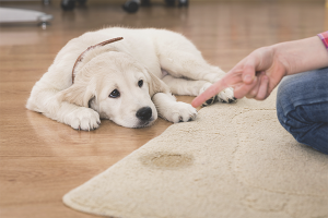 Comment se débarrasser de l'odeur d'urine de chien