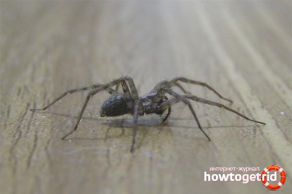 comment se d barrasser des araign es dans une maison priv e. Black Bedroom Furniture Sets. Home Design Ideas