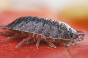 How to get rid of wood lice in the apartment