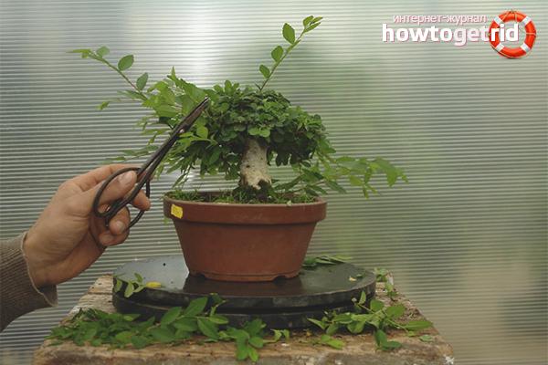Πώς να δημιουργήσετε ένα δέντρο μπονσάι