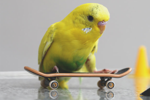 How to transport a parrot in the car