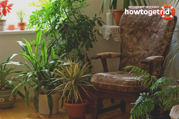 Indoor plants for air humidification