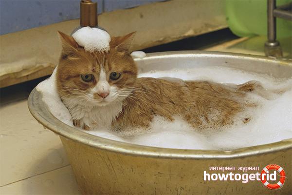 comment laver un chat s 39 il a peur de l 39 eau. Black Bedroom Furniture Sets. Home Design Ideas