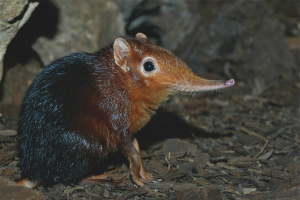 How to get rid of shrew