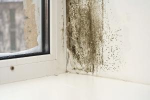 Comment se débarrasser de la moisissure sur les fenêtres en plastique