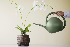 Cum să aprovizionezi orhideea