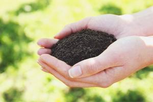 Comment rendre le sol fertile