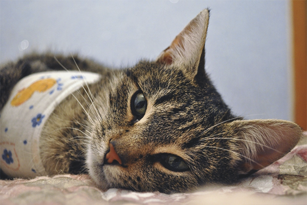 How to care for a cat after sterilization