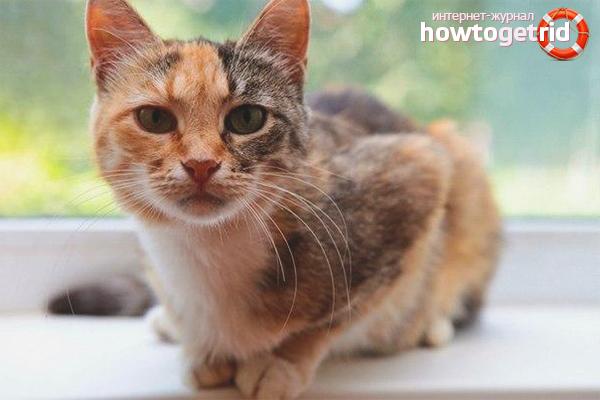 Behavior of a cat after sterilization
