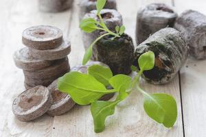 Comment utiliser les plants de tourbe