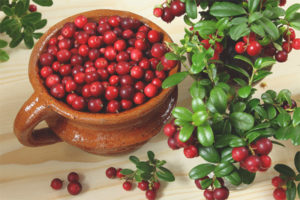 Lingonberry during pregnancy