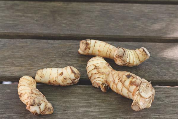 Proprietăți de vindecare și contraindicații ale rădăcinii Kalgan