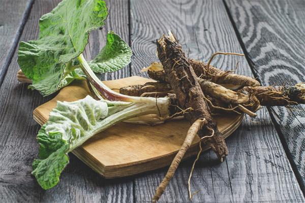 Proprietăți de vindecare și contraindicații ale rădăcinii de brusture