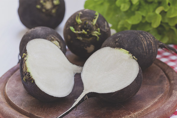 Useful properties and contraindications of black radish