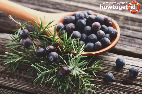 Terapia cu fructe naturale de ienupar