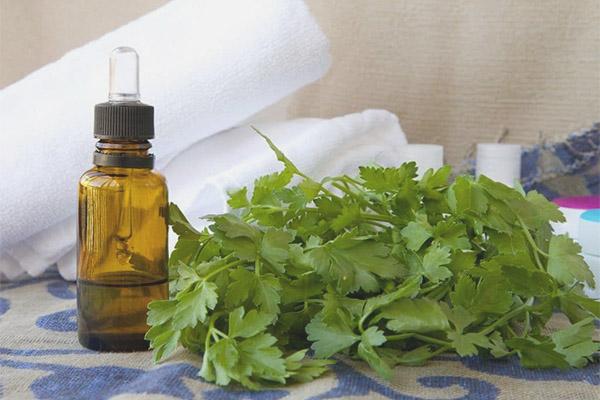 Aceite esencial de perejil - Propiedades y usos.