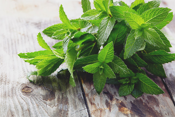 Mint during pregnancy