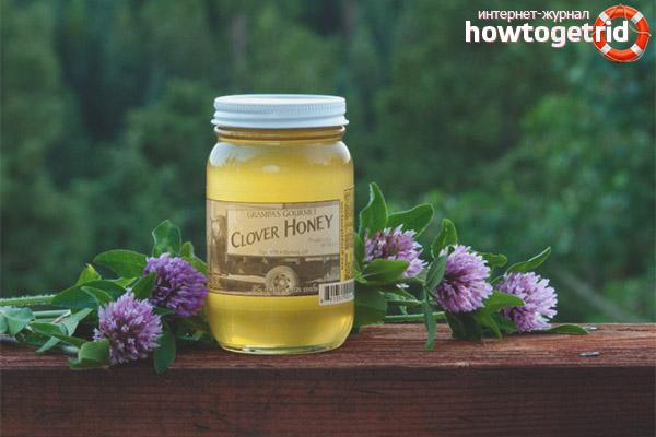 Comment choisir le miel de trèfle