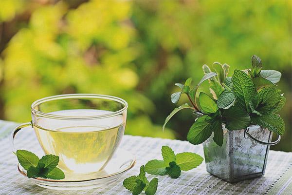 Μπορούν οι έγκυες γυναίκες να πίνουν τσάι με μέντα