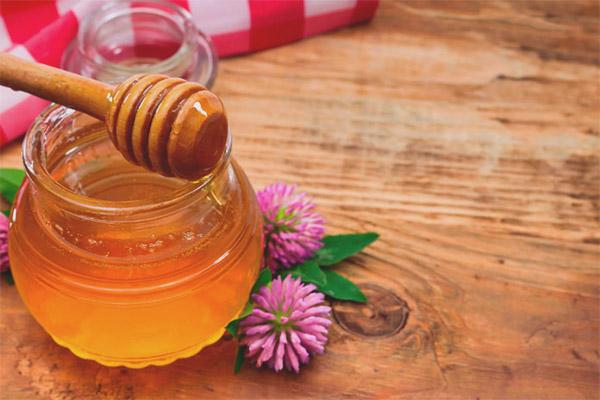 Propriétés utiles et contre-indications du miel de trèfle