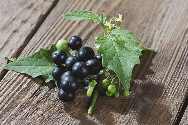 The benefits and harm of black nightshade