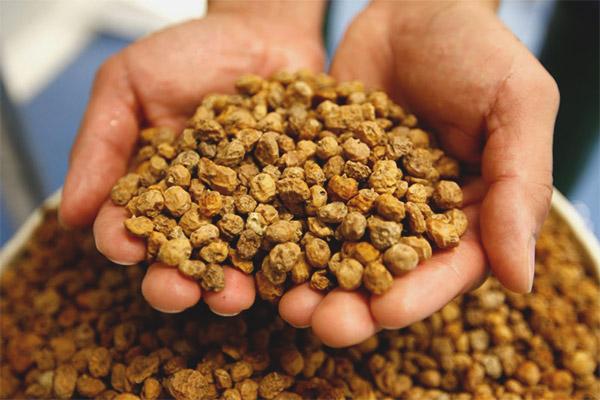 The benefits and harms of chufa peanuts