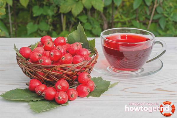 Contraindications for hawthorn medication