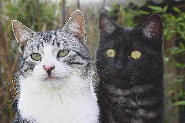 f798f1df040d Πώς να διακρίνετε μια γάτα από μια γάτα  χρήσιμες συμβουλές