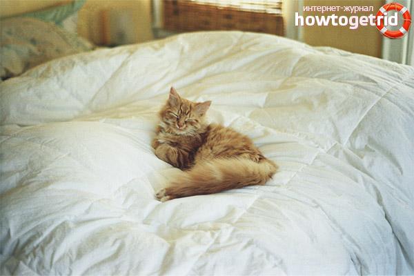 Pisses Kucing Di Atas Katil Mengapa Dan Apa Yang Perlu