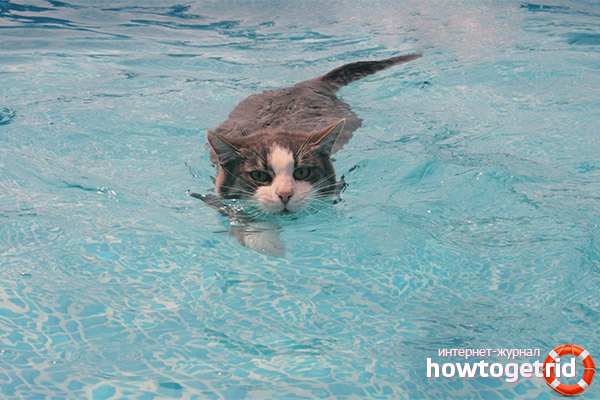How to teach a cat to water