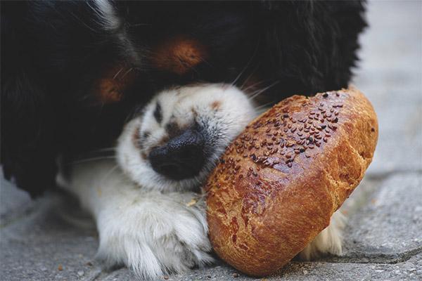 118bb9a4ca76 Μπορεί ένας σκύλος να δώσει ψωμί