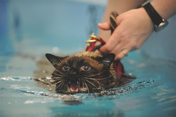Why cats and cats are afraid of water