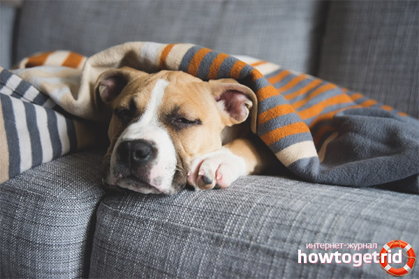 Depresia de iarnă sau postpartum la câini