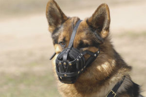 How to pick a dog muzzle