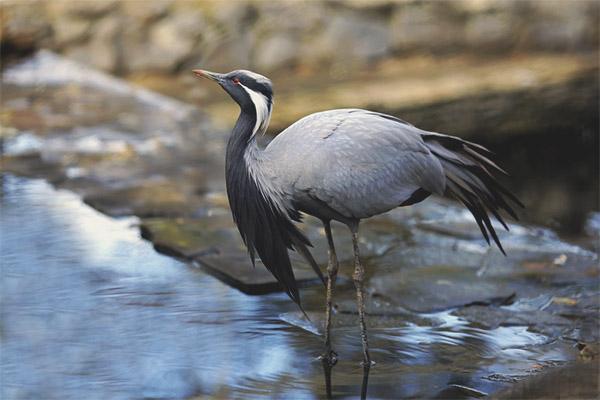 Crane bellow