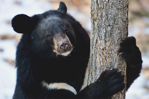 μαύρο αρκούδα σεξ νέοι άνθρωποι σεξ βίντεο