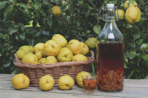 How to make quince wine