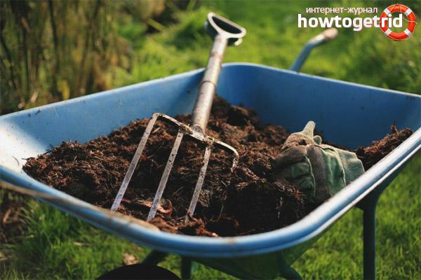 Comment fertiliser la terre pour l'ail