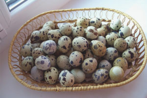 How many quail eggs can be eaten per day