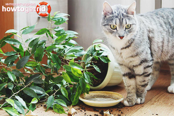 How to protect plants from cats