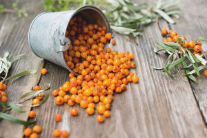 Sea buckthorn with a cold