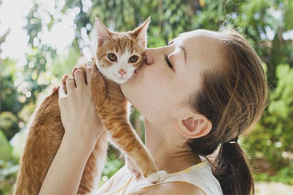 Pourquoi ne pas embrasser les chats
