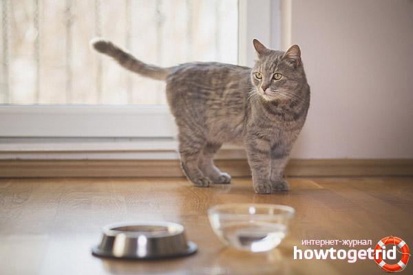 Les raisons pour lesquelles le chaton refuse l'eau